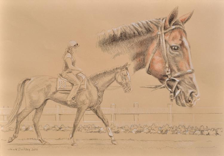 pastel drawing of a race horse by Claude Buckley- Sunshine Numbers, 11 x 14 in, pastel pencils on paper, private collection