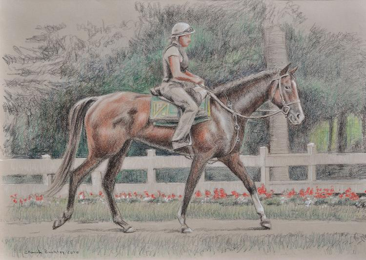 pastel drawing of a race horse by Claude Buckley- Sunshine Numbers, 11 x 14 in, pastel pencils on paper private collection