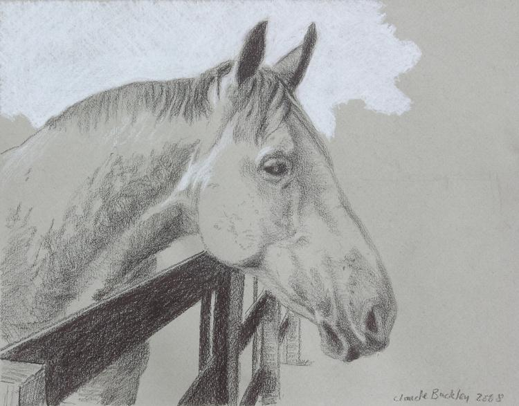 Claude Buckley- Portrait of a Horse, 11 x 14 in, pastel pencils on paper
